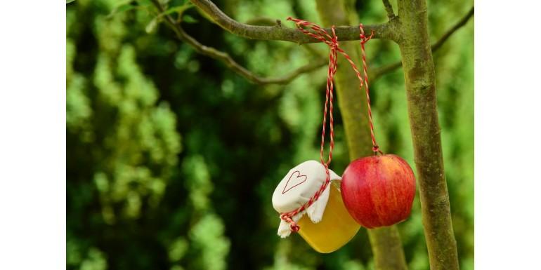 Arbres et plants fruitiers de balcon